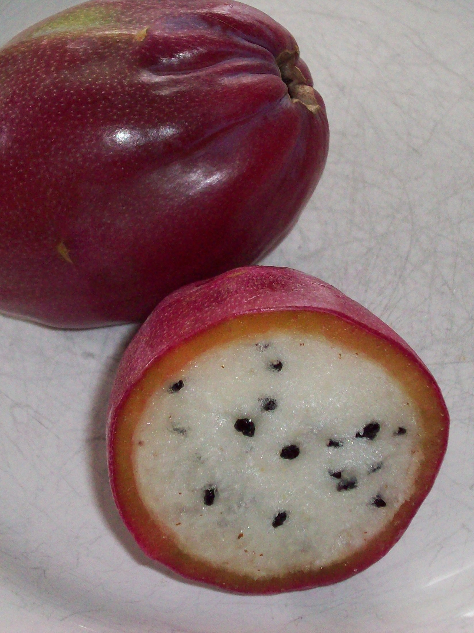 cereus_repandus_fruit